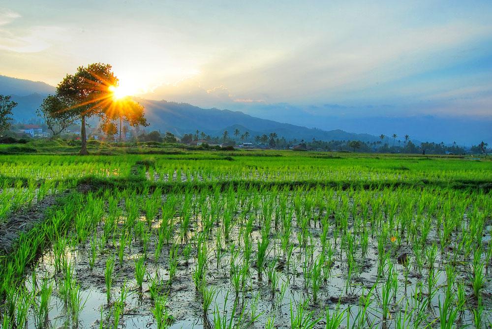 Resto dengan Pemandangan Alam Sawah Terbaik di Bali